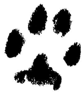 Wirral's paw print after tidying up