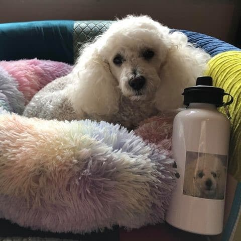 Dog with personalised paw print water bottle