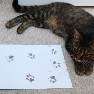 Tabby cat with her unique paw print kits