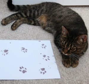 How to Take Amazing Paw Prints - Cheeky Little Prints