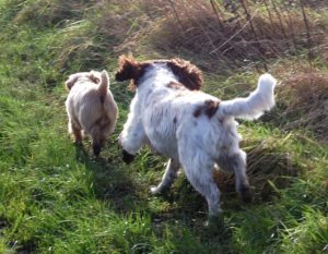 Dogs playing at the farm