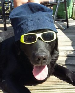 Dash dressed up in his sun hat and glasses