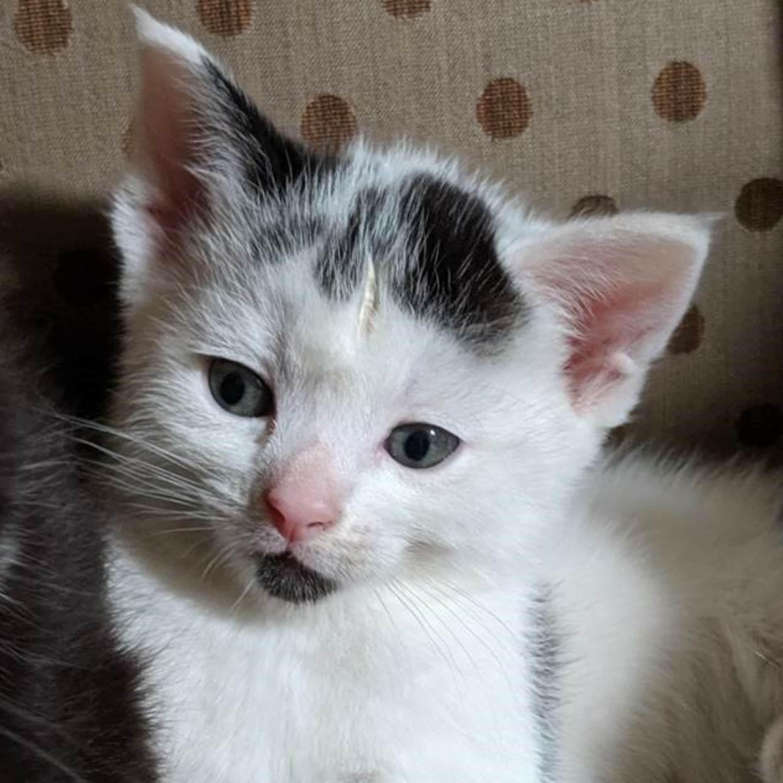 Luna our kitten at 6 weeks old