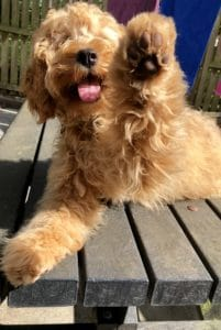 Dog putting his paw up