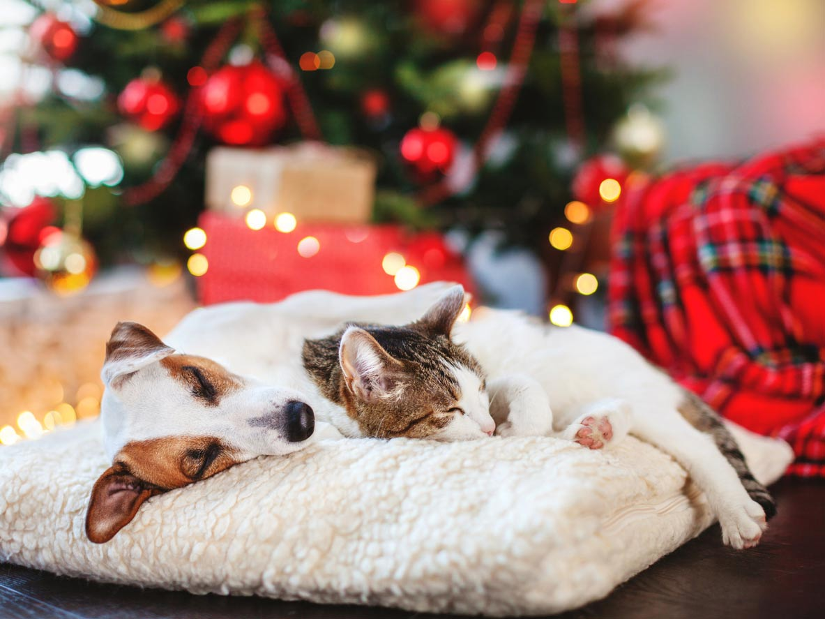 Dog and cat sleeping near Christmas tree