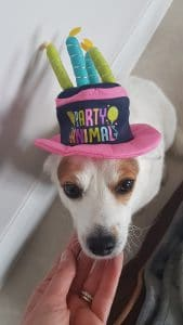 Flor the dog with her birthday hat