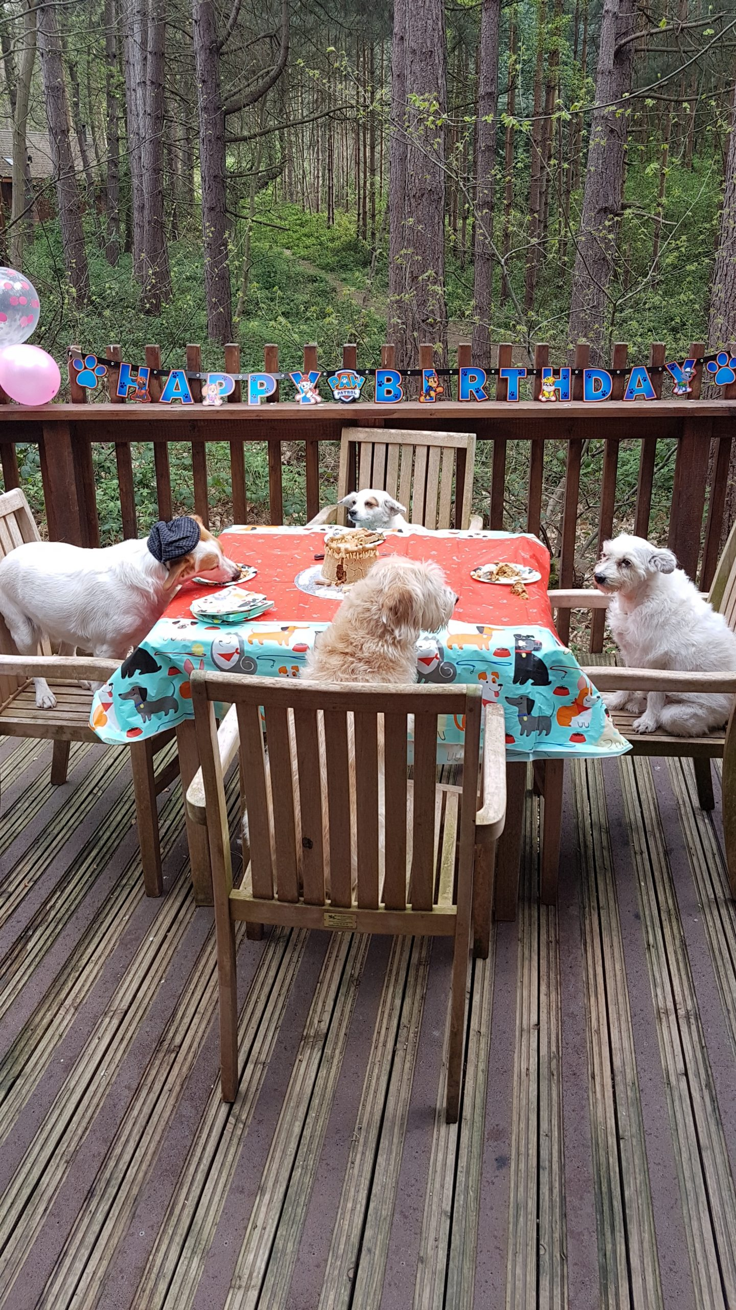 Party celebrating birthdays for dogs