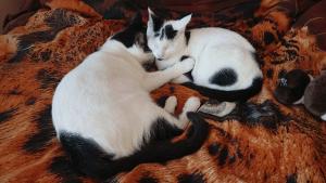 Kittens cuddling
