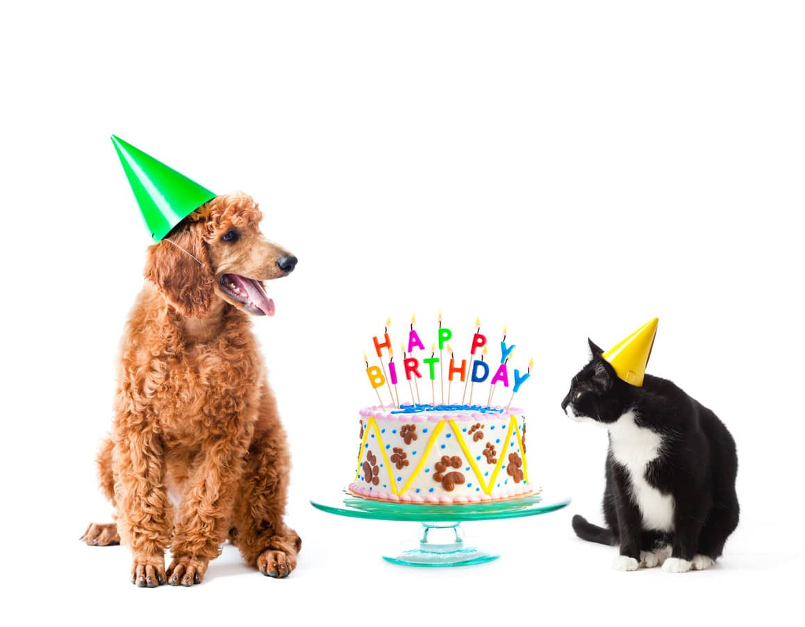 Birthdays for dogs and cats, dog and cat with birthday cake