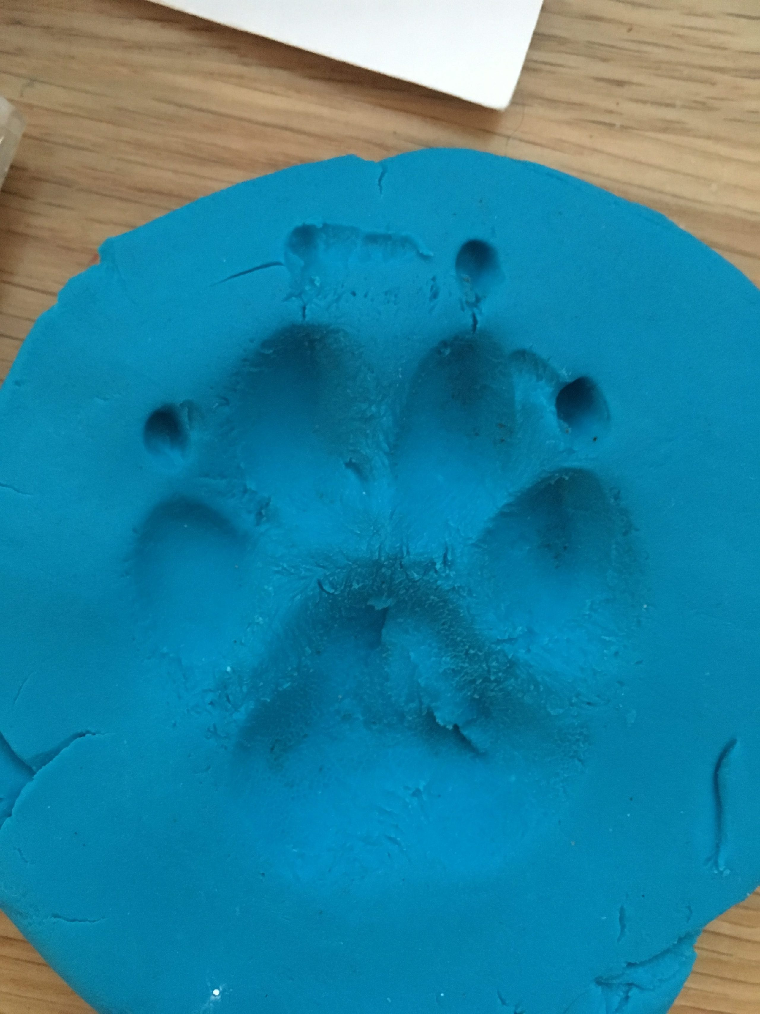 Dog paw print in play dough used to make silver paw print jewellery