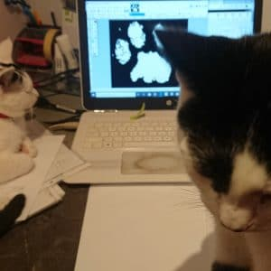 Sammy and Luna cats staff training to work on paw prints
