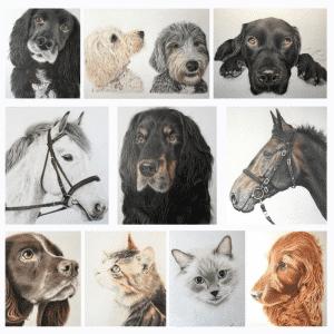 Nicky Chadwick pet portraits compilation