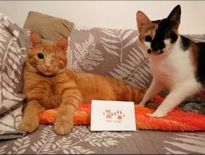 Cute cats and paw print stamp ordering personalised pet gifts