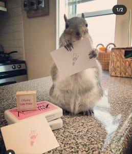 Squirrel paw print stamp