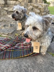 Glen of Imaal Terriers with personalised paw print gift tags