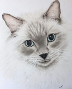 Christmas gifts for cat lovers - Nicky Chadwick cat portrait