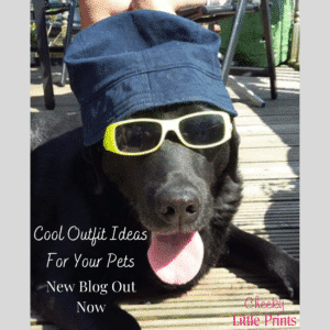 cool outfit ideas for your pets