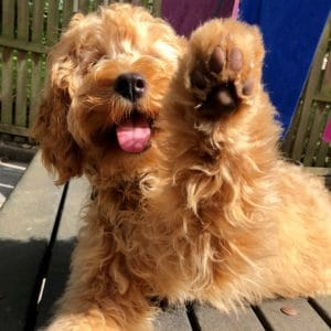 Happy, kind dog with paw up giving high five