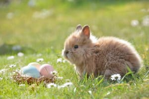 Bunny in field with Easter eggs