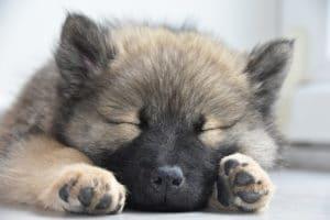 Cute puppy sleeping