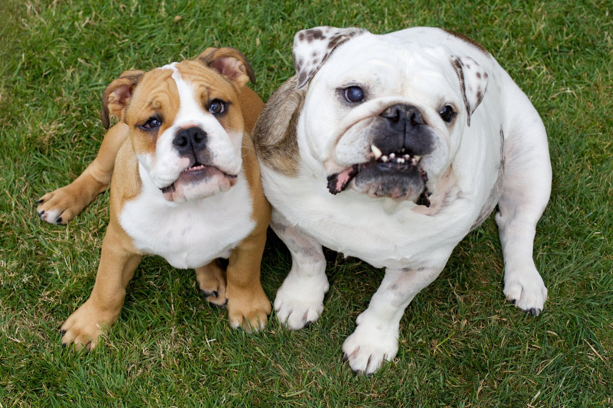 Two dogs sat on grass