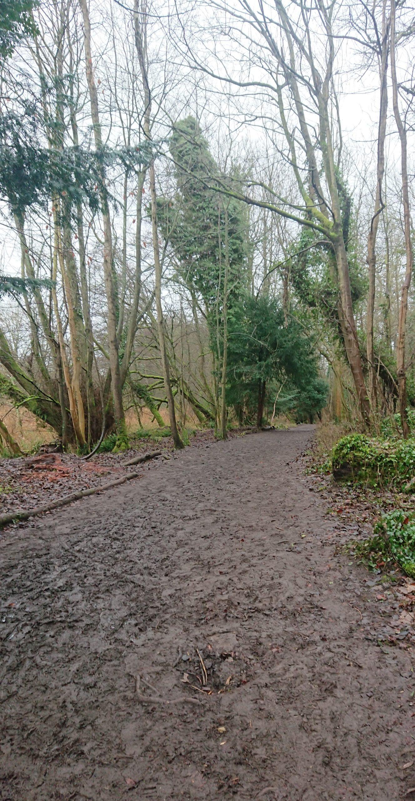 Muddy path at Stanton Woods Wiltshire