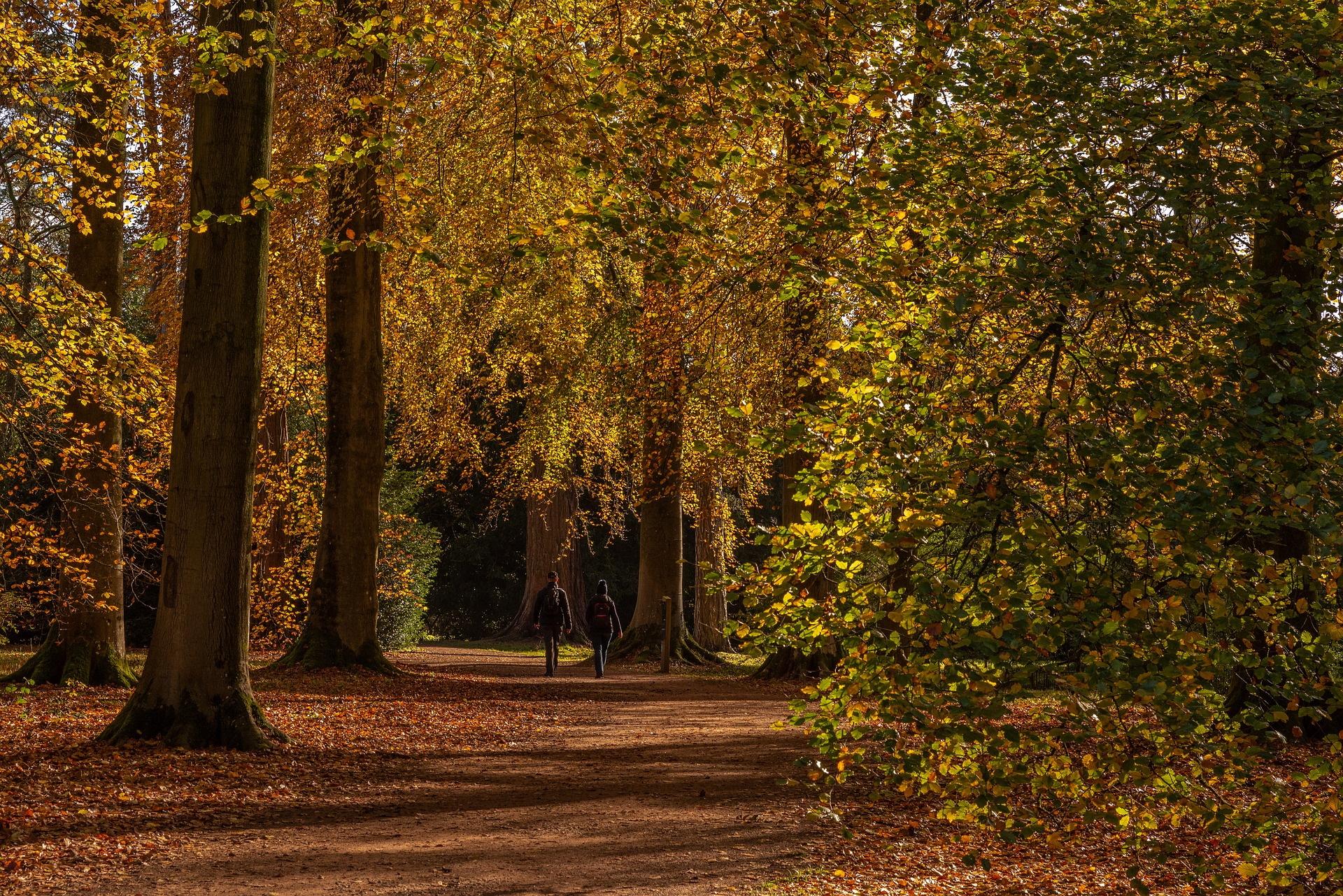 Trees and woods at Westonbirt Arboretum