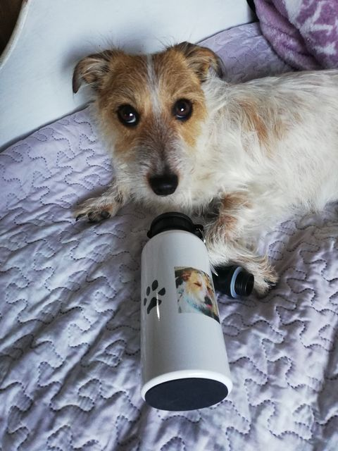 How to cool dogs down. Here is Pebbles with her personalised paw print water bottle