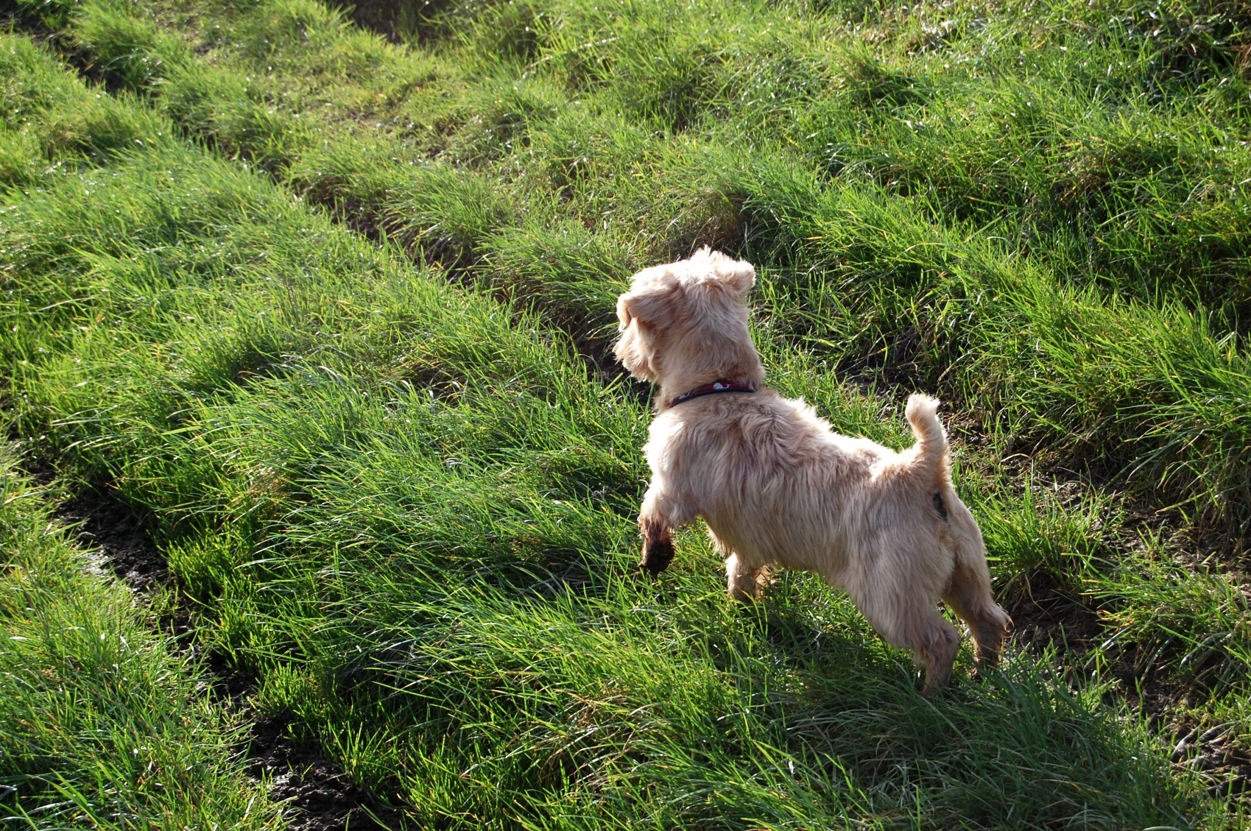 How to cool dogs down - walk them early in the morning or later in the evening when it is cooler