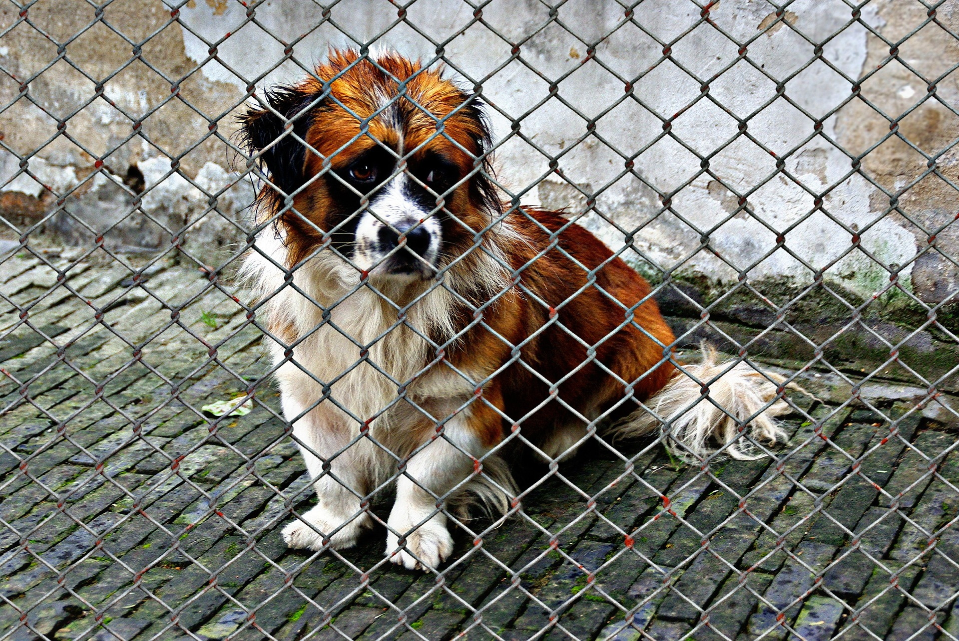 Adopt a dog and stop them looking sad behind the fencing like this dog does