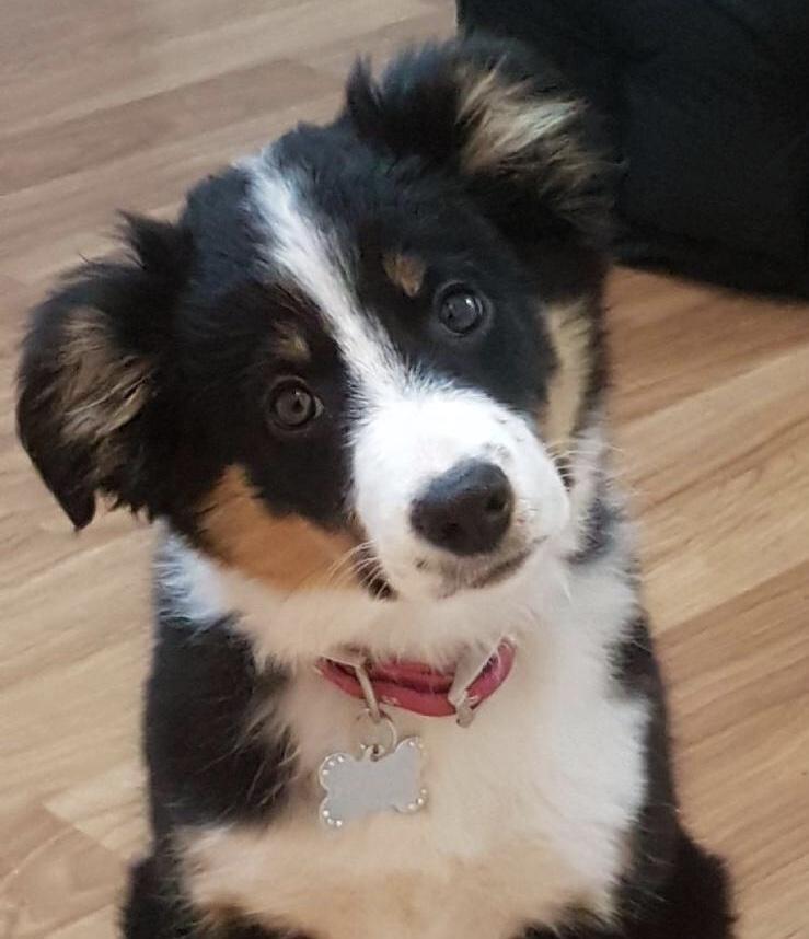 Cute puppy with head on the tilt