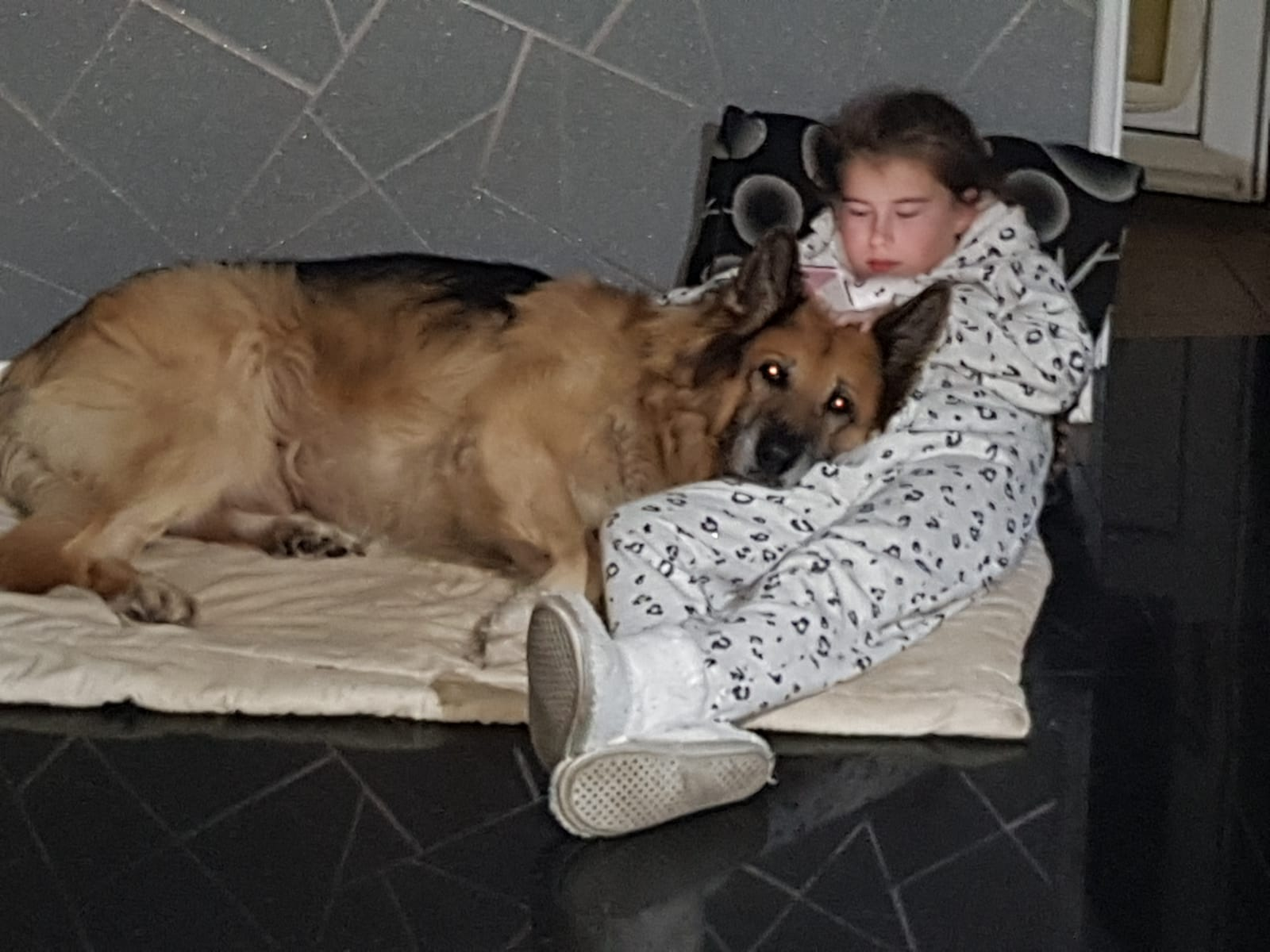 Leo the German Shepherd dog having a cuddle with his owner