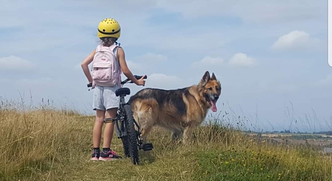 German Shepherd dog enjoying an outdoor adventure with his owner